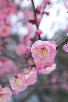 Spring is coming by Tao Sasaki on 500px, Pulse 98.6, 5/22/2014, CameraSIGMA SD1 Focal Length50mm Shutter Speed1/100 s Aperturef/5.6 ISO/Film320 CategoryNature Uploaded2 months ago TakenFeb 15, 2014