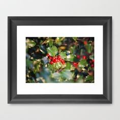 Holly Berries by Sarah Shanely Photography $31.00