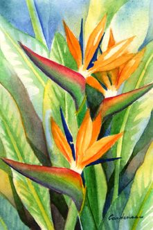 bird of paradise, Susan Cardenas watercolor