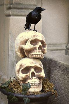 SkullPlanter2 by MrsLimestone  styrofoam skeleton heads from Michaels, small raven from 99 cents store