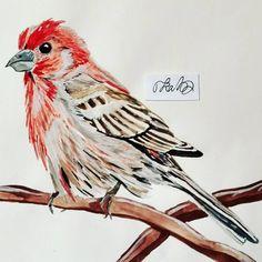 #bird #nature #housefinch #watercolor #red #to_lahtinen #art