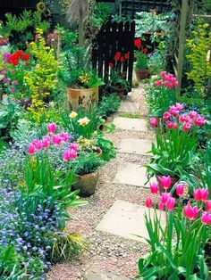 Cottage garden path - love that it is staggered, not straight. Also, the tulips in this are so striking!