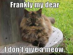 the funny animals (24)