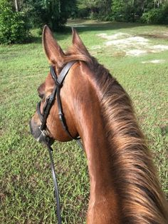 Trail Riding, Horse Riding, Horse Ears, All About Horses, Cute Horses, Horse Pictures, Horse Photography, Farm Life, Animals Beautiful