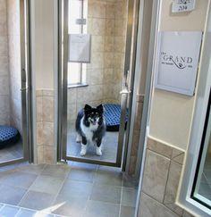 The Grand Pet Resort - Designed by Animal Arts Design Studios