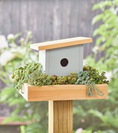 Putting up a birdhouse is an easy way to add a cute and stylish decoration to your garden, plus it also helps make it more welcoming to winged visitors. You could always go with a commerically available model, but this DIY birdhouse is a unique option that you can put together in a couple of hours. #diybirdhouse #birdhouseplans #planter #bhg Bird Houses Painted, Bird Houses Diy, Outdoor Paint, Outdoor Decor, Cedar Lumber, Small Plants, Diy Wood Projects, Container Gardening, Diy Birdhouse