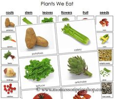 Plants We Eat - Printable Montessori Nutrition and Health Materials for Montessori Learning at home and school.