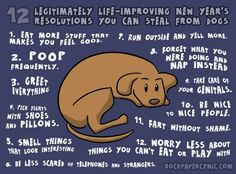 new years resolutions you can learn from your dog, Whats your new year's resolution? New Year Resolution Quotes, Year Resolutions, Resolution List, I Love Dogs, Puppy Love, Funny Animals, Cute Animals, Funny Dogs, Funniest Animals