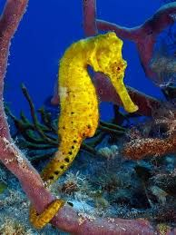 nature photography sea horses - Google Search