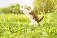Found on Bing from www.colourbox.com Cute Little Kittens, Soap Bubbles, Kittens Playing, Buy Posters, Diy On A Budget, Four Legged, Animals Beautiful, Diy Gifts, Your Pet