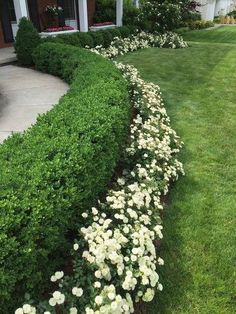 Add value to your home with best front yard landscape. Explore simple and small front yard landscaping ideas with rocks, low maintenance, on a budget. Boxwood Landscaping, Small Front Yard Landscaping, Front Yard Design, Backyard Landscaping, Boxwood Hedge, Evergreen Hedge, Front Yard Hedges, Backyard Ideas, Pool Ideas