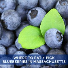 where to eat and pick blueberries in #Massachusetts (including 25 pick your own spots!