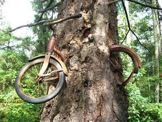 The story goes that a young man left his bike chained to a tree in 1914 when he went off to war.