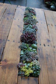 Vetplantjes tegenwoordig mijn favoriet plantje vooral groeit niet zo hard, en is heel decoratief, 'n idee voor je tuintafel, maar ik zou de gehele plank uithalen, want wat doe je dan in de winter?!
