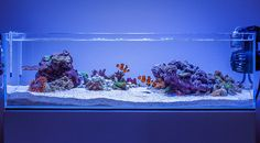 reef-aqua-design: daletu's ADA 60F Shallow... - ☁ ♥ ☼ ✿