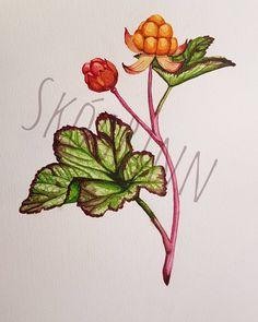 Hjortron, så fascinerande och vackra 。.。:+♡* (Något sånt, @linamarialarsson ;) / Cloudberries, fascinating and beautiful 。.。:+♡* / Rubus chamaemorus 。.。:+♡* Outdoor Art, Art Pictures, Sketching, Tatoos, Tattoo Ideas, Ink, Beautiful, Instagram, Drawings