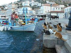 Ydra island Greece... 2072017