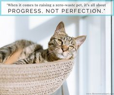Cat Care Indoors - Wondering if you're giving your indoor cat the best possible life? StyleTails' Cat Editor, Aideen Mccanny, answers the most commonly asked questions posed by indoor cat owners. The indoor ver… Cool Cats, Cool Cat Trees, Cute Kittens, Cats And Kittens, Cat Dewormer, Silver Tabby Cat, Gatos Cool, Video Chat, Son Chat