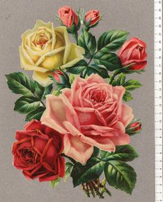 Rose Pictures, Pictures To Paint, Vintage Botanical Prints, Botanical Art, Victorian Flowers, Vintage Flowers, Beautiful Rose Flowers, Fruit Painting, Floral Illustrations