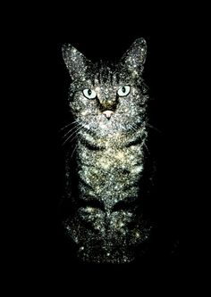 Celestial Cats - Zippora Lux