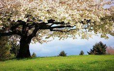 """""""Pense em uma majestosa árvore coroada por uma cúpula de folhagens. Ela estende ao longe seus galhos e sua glória.   Como a árvore surgiu?  Graças à imensa energia presente na semente.""""  Catharose de Petri"""