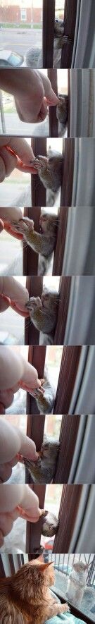 Un écureuil gourmand... ...