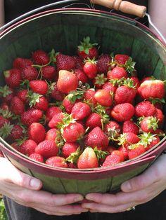 Growing Strawberries: FYI