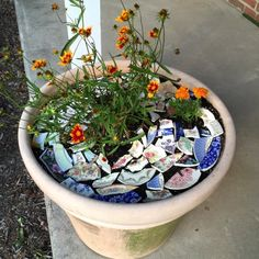 Dishfunctional Designs: How To Stop Critters From Digging In Your Flower Pots