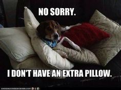 Beagles don't share!