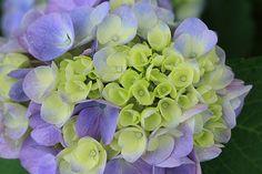 pale purple by Sky-Genta
