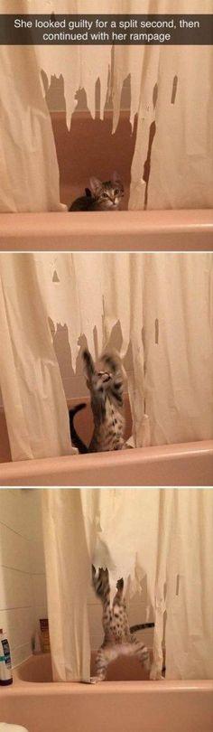 30 Funniest Cat Memes #Funny Cats #cat memes