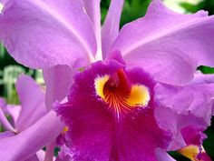 What is the national flower of Brazil?