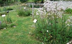 Giardino della Flora Appennica - Capracotta