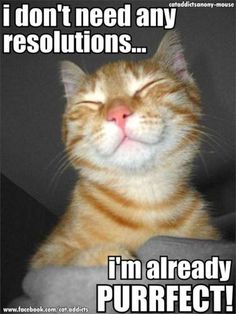 Cat new year holiday - cat memes - kitty cat humor funny joke gato chat captions feline laugh photo Happy Animals, Animals And Pets, Funny Animals, Cute Animals, Funniest Animals, I Love Cats, Crazy Cats, Cute Cats, Cat Fun