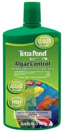1000 ideas about pond algae on pinterest for Koi pond algae control