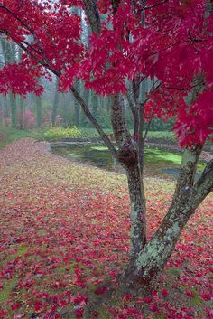 tree, color, forest