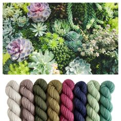 Color inspiration for baby blanket Dyeing Yarn, Color Inspiration, Succulents, Blanket, Mini, Baby, Succulent Plants, Blankets, Baby Humor