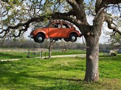 VWs do grow on trees!