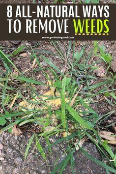 Garden Bugs, Garden Insects, Garden Weeds, Lawn And Garden, Plants That Repel Bugs, Cool Plants, Backyard Vegetable Gardens, Container Gardening Vegetables, Gutter Garden
