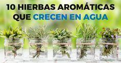 10 hierbas aromáticas que puedes cultivar en agua
