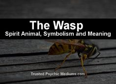 What does the wasp spirit animal really mean? Find out the true meaning and symbolism of the wasp in this special spirit animal analysis. Animal Totem Meanings, Animal Symbolism, Power Animal, Animal Magic, Spirit Meaning, Spiritual Animal, Animal Spirit Guides, Animal Totems, Spirituality