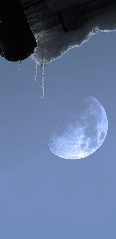 ♥ Moon and Ice share moments