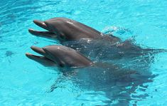 Dolphins off Crab Island near Destin by VISIT FLORIDA. #Destin #Florida #beach:)