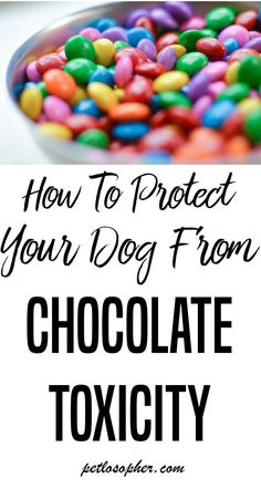 #dogs #dogsafety #dogemergency | Dog Safety | Dogs and Chocolate | Dogs & Chocolate | Chocolate Dangerous | Candy