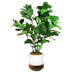 Fiddle-Leaf Tree in Planter, Faux, Set in a two-tone metallic-dipped earthenware planter, this lifelike, lush fiddle-leaf tree will instantly liven up any room. Fresco, Topiary Trees, Topiaries, Fiddle Leaf Fig Tree, Silk Tree, Artificial Plants, House Plants, Accent Decor, Greenery