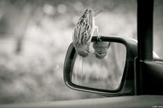 the bird that thinks objects in a mirror appears closer than they look to be :))