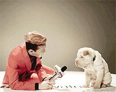 This is the cutest thing I've ever seen in my whole life! That dog looks so happy with his wagging tail. I'd be happy too next to G Dragon lol