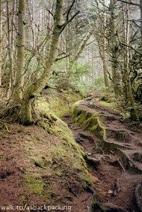 Hobbit Trail near Florence Oregon!!! Beautiful Trail leads to the beach!