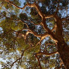 tree branches Tree Branches, Trees, Tree Art, Nature, Plants, Museum, Outdoor, Outdoors, Naturaleza