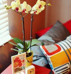 gelb-und-rosa-farben-orchidee